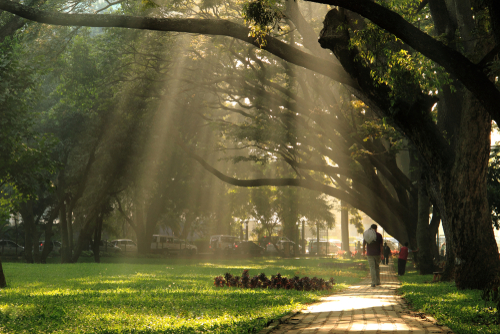 8-things-to-do-in-Hyderabad-walk-in-park
