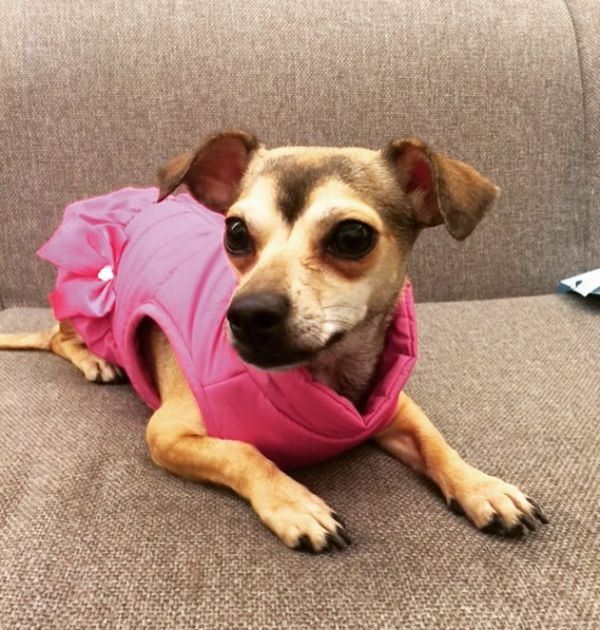 5-priyanka-chopra-dog-diana-in-pink-jacket