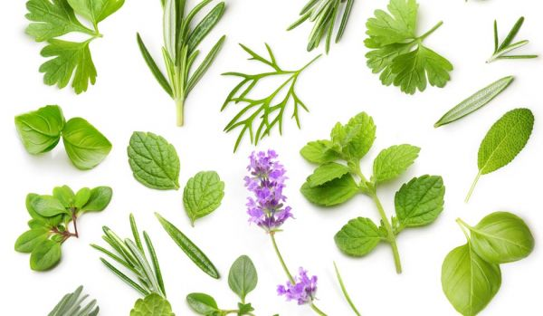 herbs for Skin 1
