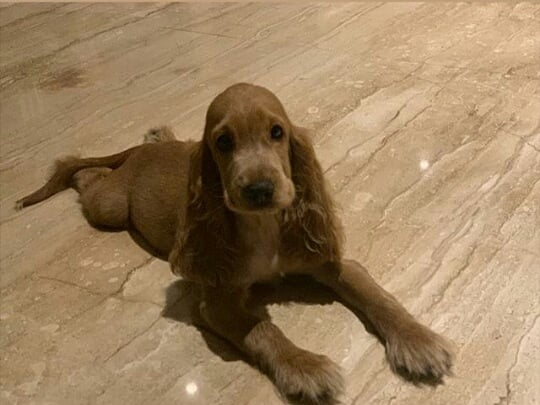 3 bailey chopra priyanka posted the puppy's picture
