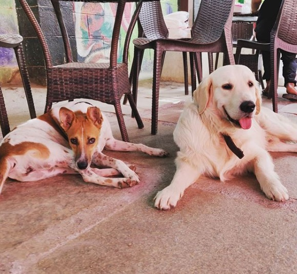 3-pet-friendly-resturants-in-bangalore