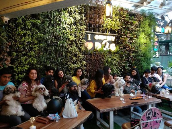 Pet-friendly-cafes-cafe-Mumbai-dog-cat-cafe-pefe