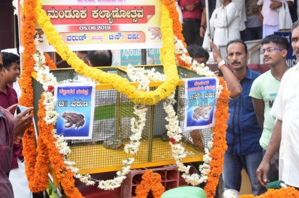 Frogs-tie-nuptial-knot-to-appease-Rain-God-in-Udupi-1