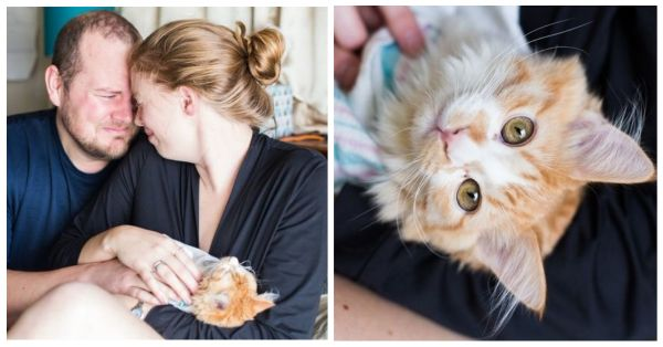 This Couple's Viral Cat Maternity Photo Shoot Is All Kinds Of Weird And Funny!