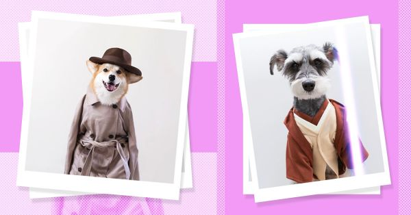 18 Fashionable Pooches That Will Make Your Tuesday Awww-some AF!