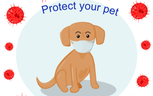 prevention tips from corona virus for your pet