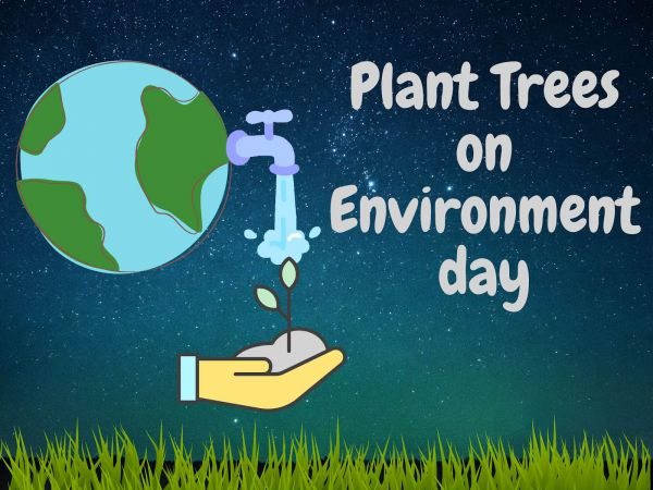 Plant Trees On World Environment day