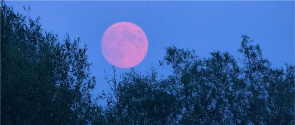 The 'Super Flower Moon' Today Is The Lockdown Present We All Deserve