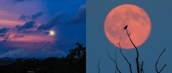 Strawberry Moon Eclipse Is Here To Give Us Some Respite, Watch It Tonight