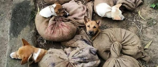 Finally, Some Good News! Nagaland Bans The Consumption & Sale of Dog Meat