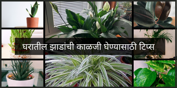 How To Take Care Of Trees In Marathi