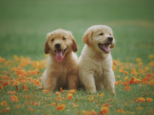 cute names for dogs
