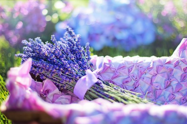 Side effects of lavender oil- May cause irritation