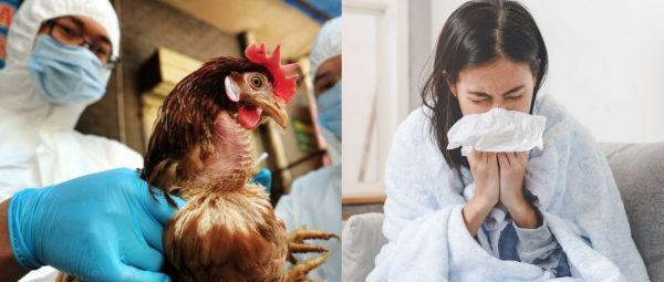 H5N1 वायरस, Bird Flu Virus, Bird Flu, बर्ड फ्लू, नॉनवेज
