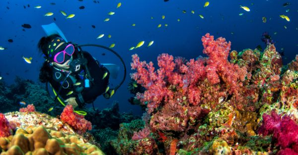 5 Best Scuba Diving Spots In The Country
