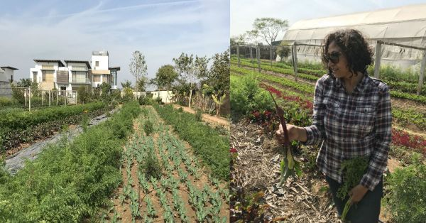 Farm Fresh: What A Day Spent On An Organic Farm In Tijara, Rajasthan Is Like