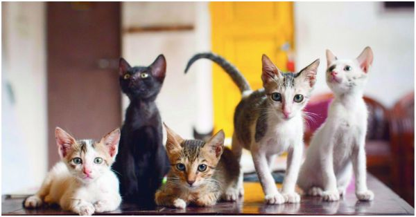 7 Pet Cafes In India That You Must Visit For A Purrfect Weekend!