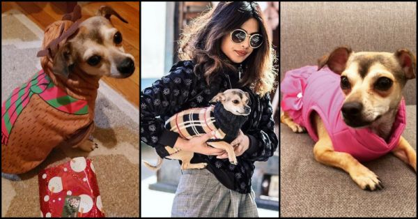 When Your Net Worth Is Rs 200 Crores, You Buy A Jacket Worth Rs 36 Lakhs For Your Dog!