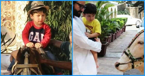 From Horseriding To Befriending Cows: Taimur Ali Khan Is The Cutest Cowboy In Town