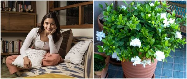 7 Home Fragrance Products Under Rs 500 That Will Make Your Home Smell Like A Lush Garden!