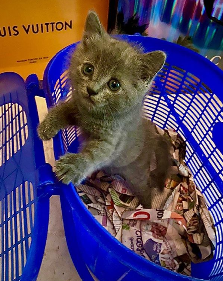 aly goni's cat gifted by jasmin bhasin