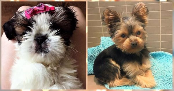 Just 7 Pictures Of Cute Puppies To Make Your Hearts Happy!